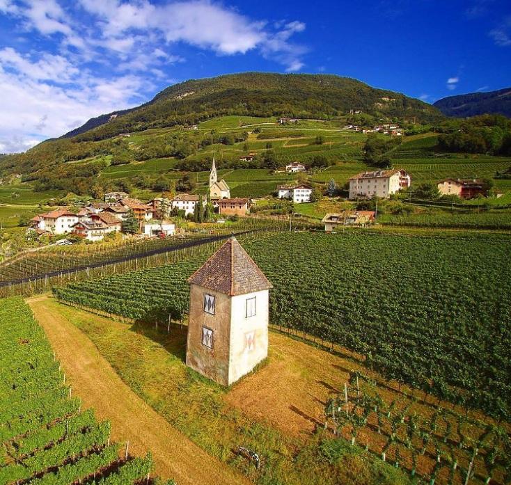 Wein-Fakten über Südtirol_ART